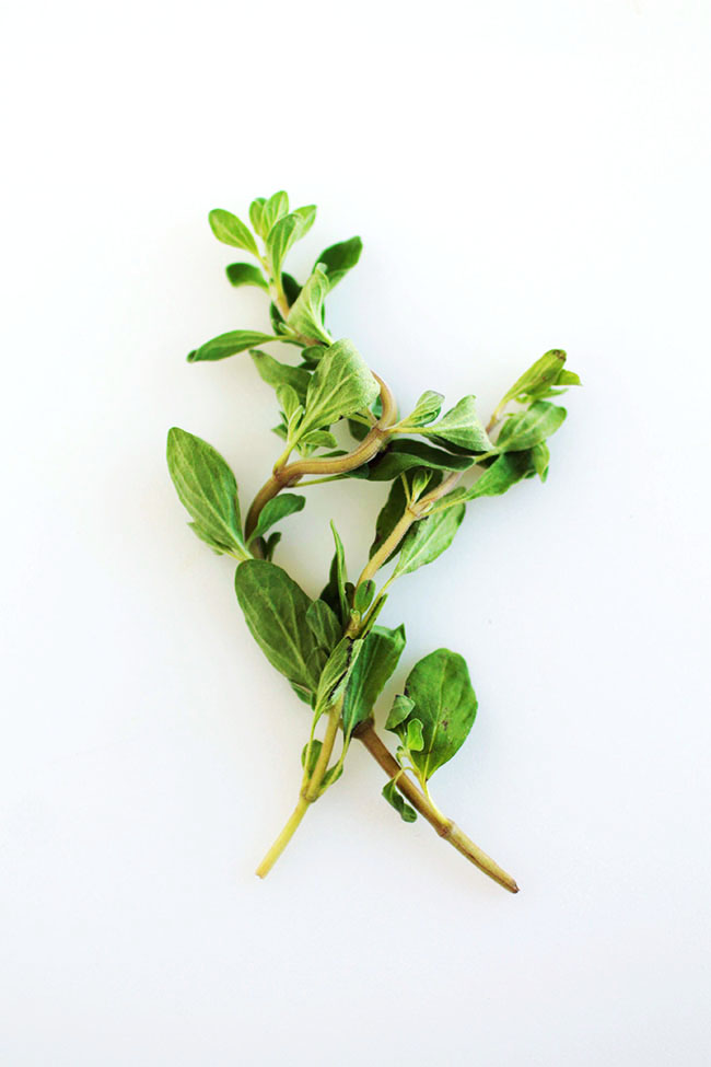 Herbs 101   Everything you need to know about storing and using fresh herbs, all wrapped into one post! How to store herbs, when to add herbs during cooking, types of herbs, and more!