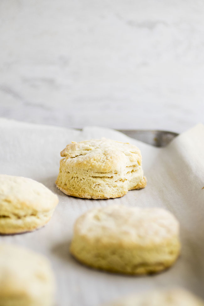 Easy Vegan Biscuits | You'll love this simple, fluffy vegan biscuit recipe - you won't even miss the butter! Ready in less than 30 minutes and made with coconut milk and coconut oil for a vegan twist on a classic breakfast recipe. Great for vegan baking. Vegetarian, Vegan.