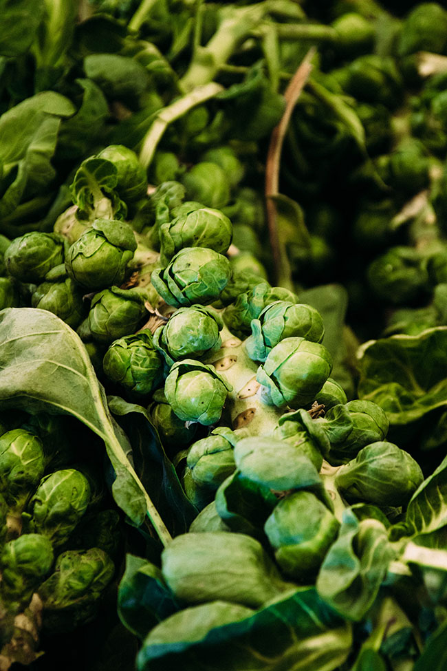 Zittel and Sons Farm - Join me on a tour of Amos Zittel & Sons Farm in Upstate New York! We're talking brussels sprouts, farming, and the New York State Grown and Certified Program. #ad