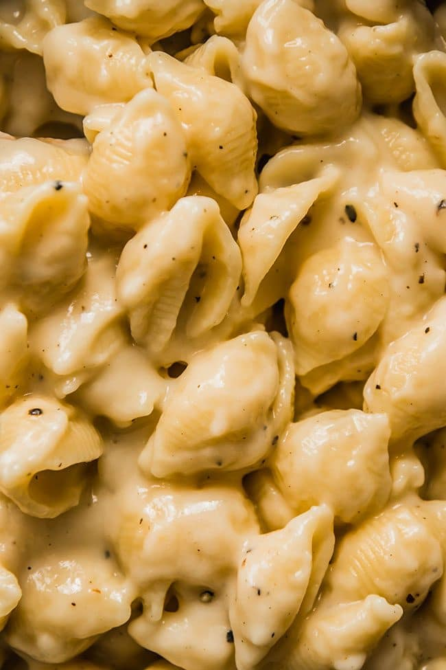 shell pasta in a creamy cauliflower cheese sauce